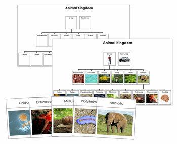 Animal Kingdom: Charts and Cards