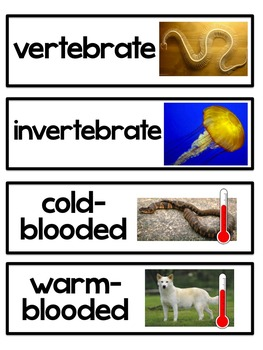 Animal Kingdom: Classification of Vertebrates and Invertebates