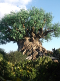 Animal Kingdom Cool Tree Sleepy Hollow Fantasy Story PIC FREE!