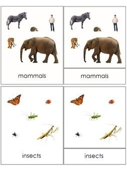 Animal Groups Montessori 3-part cards