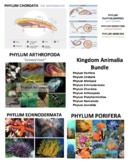 Animal Kingdom - Kingdom Animalia Bundle (Editable)