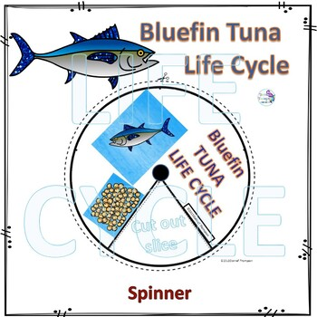 Animal Kingdom Life Cycle Spinner Bundle 3
