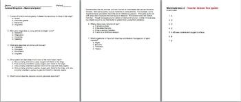 Animal Kingdom Mammals Unit Bundle - 7 files