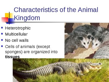 Animal Kingdom Notes