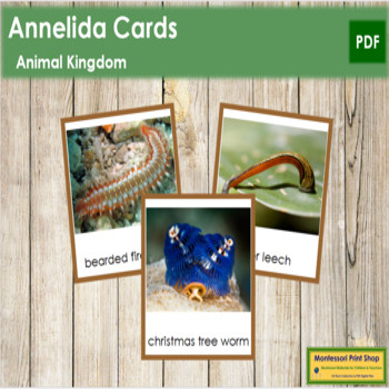 Animal Kingdom: Phylum Annelida (color borders)