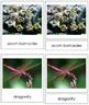 Animal Kingdom: Phylum Arthropoda