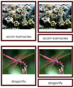 Animal Kingdom: Phylum Arthropoda (color borders)