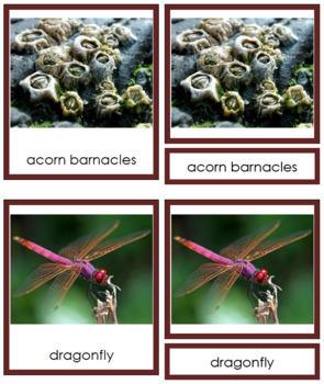 Animal Kingdom: Phylum Arthropoda (color borders)