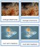 Animal Kingdom: Phylum Cnidaria (color borders)