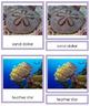 Animal Kingdom: Phylum Echinodermata (color borders)