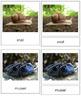 Animal Kingdom: Phylum Mollusca