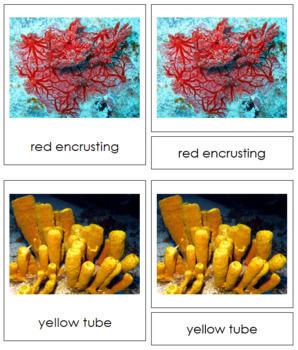 Animal Kingdom: Phylum Porifera