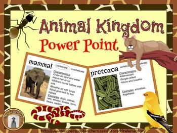 Animal Kingdom Power Point