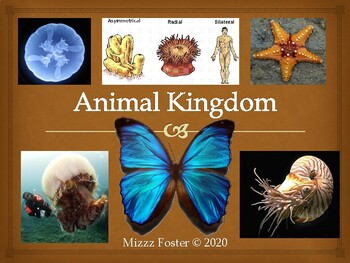 Animal Kingdom Power point