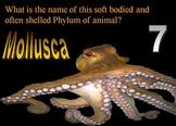 Animal Kingdom Quiz Game and Mammals