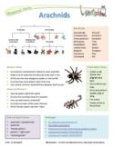 Animal Kingdom Research - Vertebrates and Invertebrates, Fish, Reptiles etc