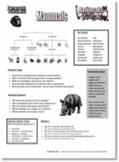 Animal Kingdom Research - Vertebrates and Invertebrates