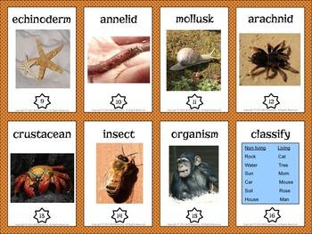Animal Kingdom Vocabulary Trading Cards