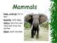 Animal Kingdom and Characteristics