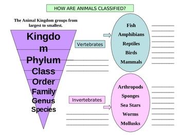 Animal Kingdoms Classified by Vertebrates and Invertebrate