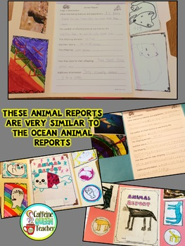 Ocean Animal Report and Informational Writing Lapbook For Research