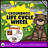Animal Life Cycle Activities (Groundhog Life Cycle Craft)