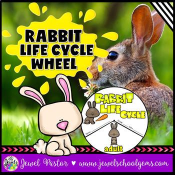 Animal Life Cycle Activities (Rabbit Life Cycle)