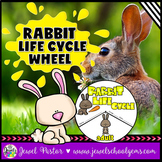 Animal Life Cycle Activities (Rabbit Life Cycle Craft)