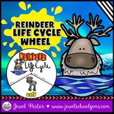 Animal Life Cycle Activities (Reindeer Life Cycle Craft)