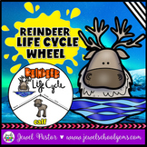 Animal Life Cycle Activities (Reindeer Life Cycle Craft)