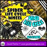 Science Halloween Activities (Spider Life Cycle Craft)