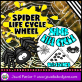 Animal Life Cycle and Science Halloween Activities (Spider Life Cycle Craft)