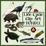 Realistic Animal Life Cycle Clip Art Bundle