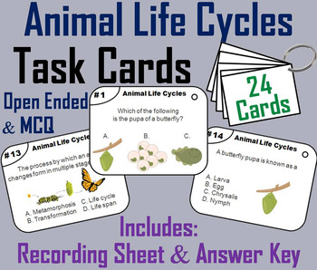 Animal Life Cycles Task Cards: Butterfly, Frog, and Chicken