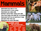 Animal Classification & Life Cycles