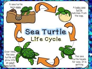 Animal Life Cycles 2.4
