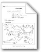 Animal Life Cycles: Amphibians