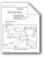 Animal Life Cycles: Amphibians