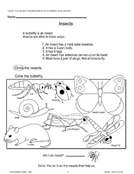 Animal Life Cycles: Insects
