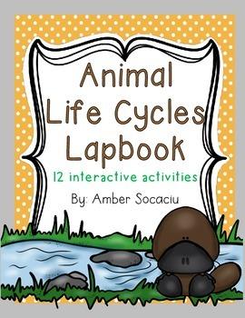 Animal Life Cycles Lapbook