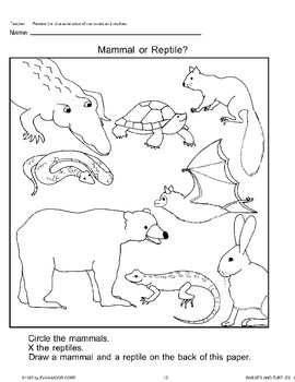 Animal Life Cycles: Mammals and Reptiles