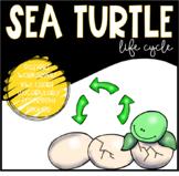 Animal Life Cycles: Sea Turtles