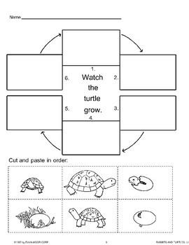Animal Life Cycles: Turtles