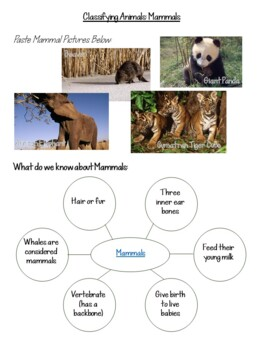 Animal Life Cycles Science Unit {Insects, Bugs, Small Crawling Flying}