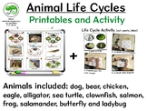 Animal Life Cycles Worksheets and Printables