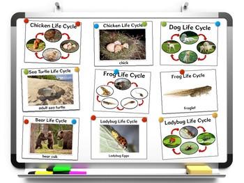Animal Life Cycles Worksheets and Printables
