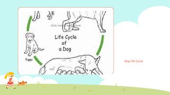 Animal Life cycle and Food Chain