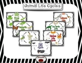 Animal Lifecycle Worksheets and Posters