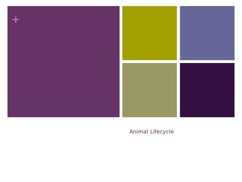 Animal Lifecycles