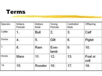 Animal Livestock Terms
